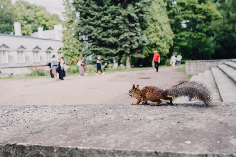 Squirrels also love art and nuts..