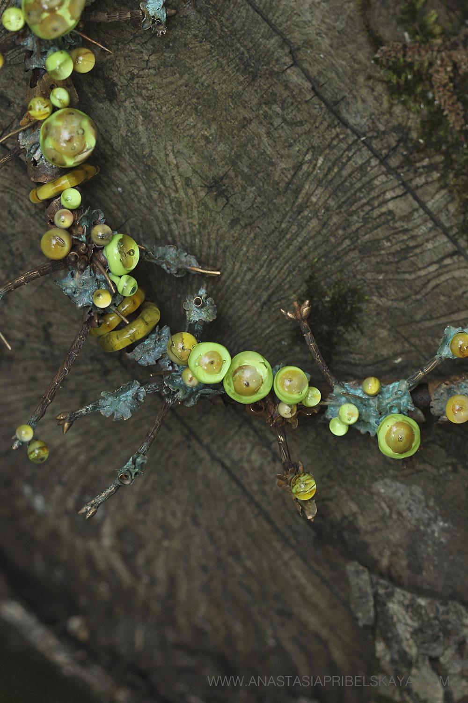 Cladonia collection by Anastasia Pribelskaya