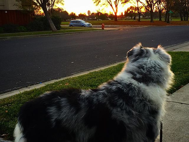 A sunset stroll among good company. Happy New Year everybody! #professionalpetperson