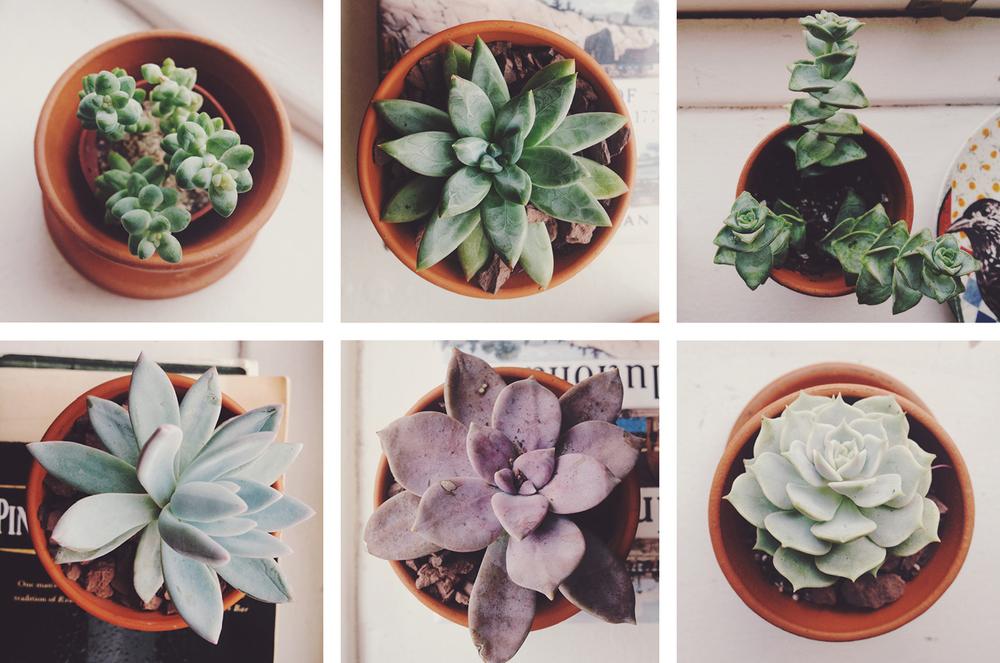 SQ.still.succulents.JPG