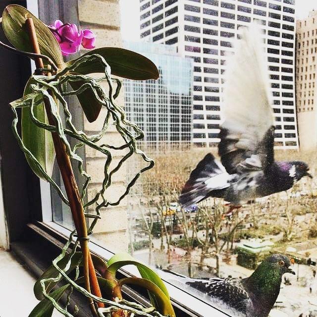 Current mood: grow where you are planted. #city life #newyork #pidgeon #everydaywonders #birdsofinstagram  Regram via @marcelshots