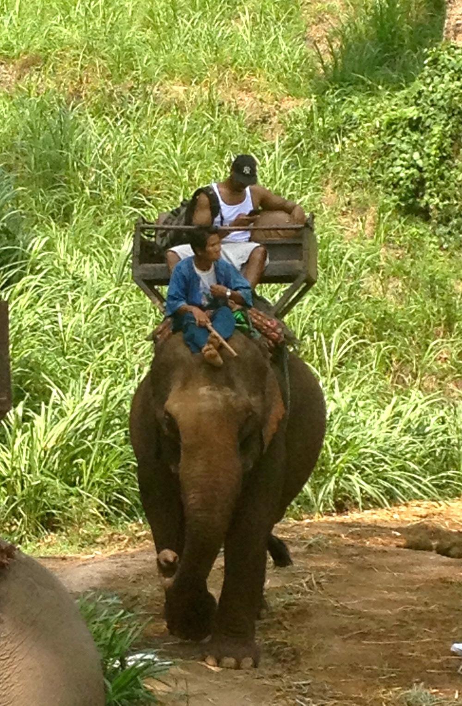 Chang Mai Elephant.jpg