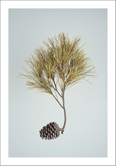 "9-24-14, Ode to Edie (Pine Cone) | 19.75""x14"" (framed)"