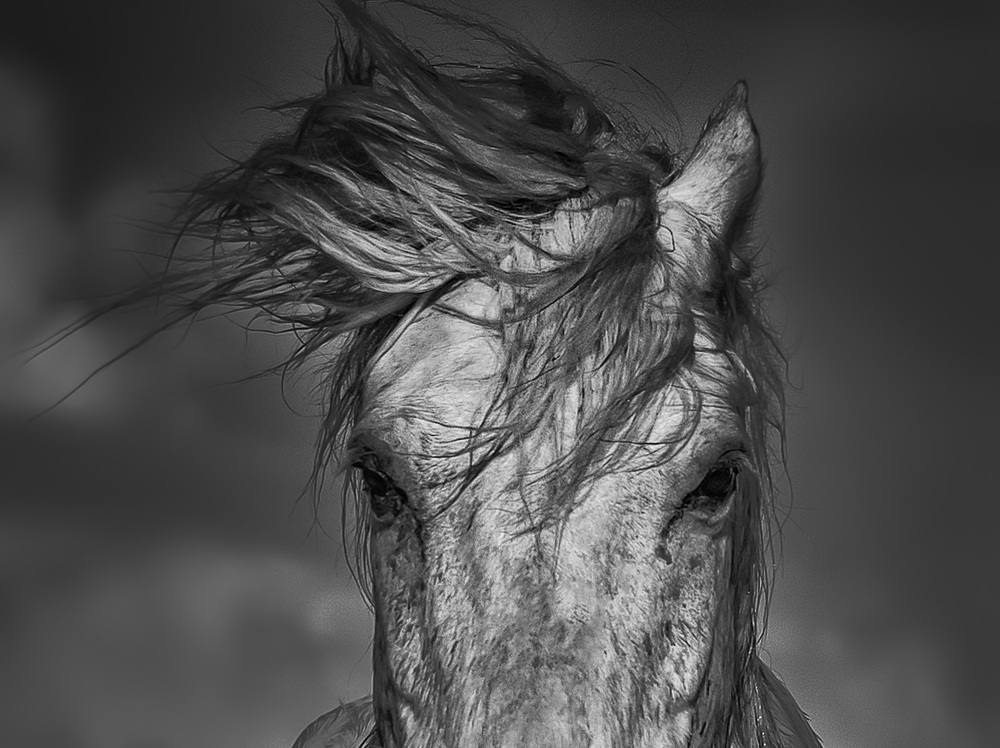 Camargue (Heidi M. Nunnally)-2.jpg