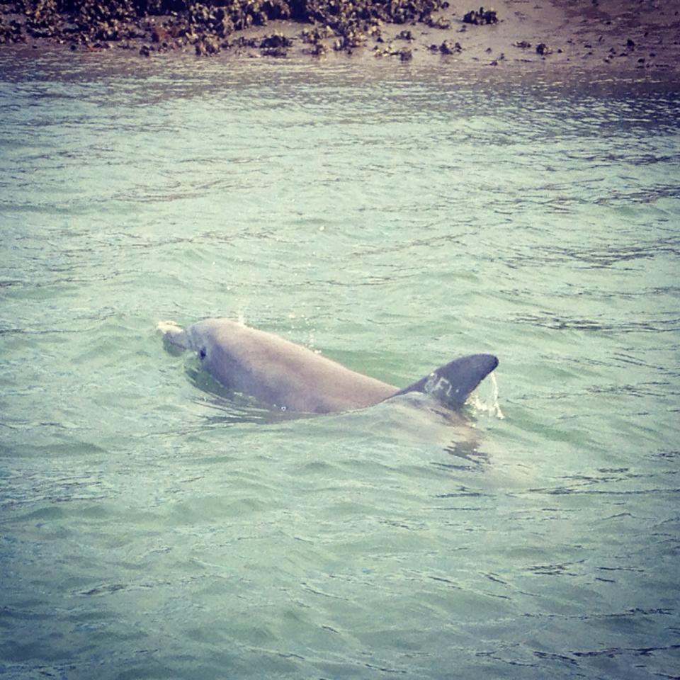 enjoy Dolphin watching at its best
