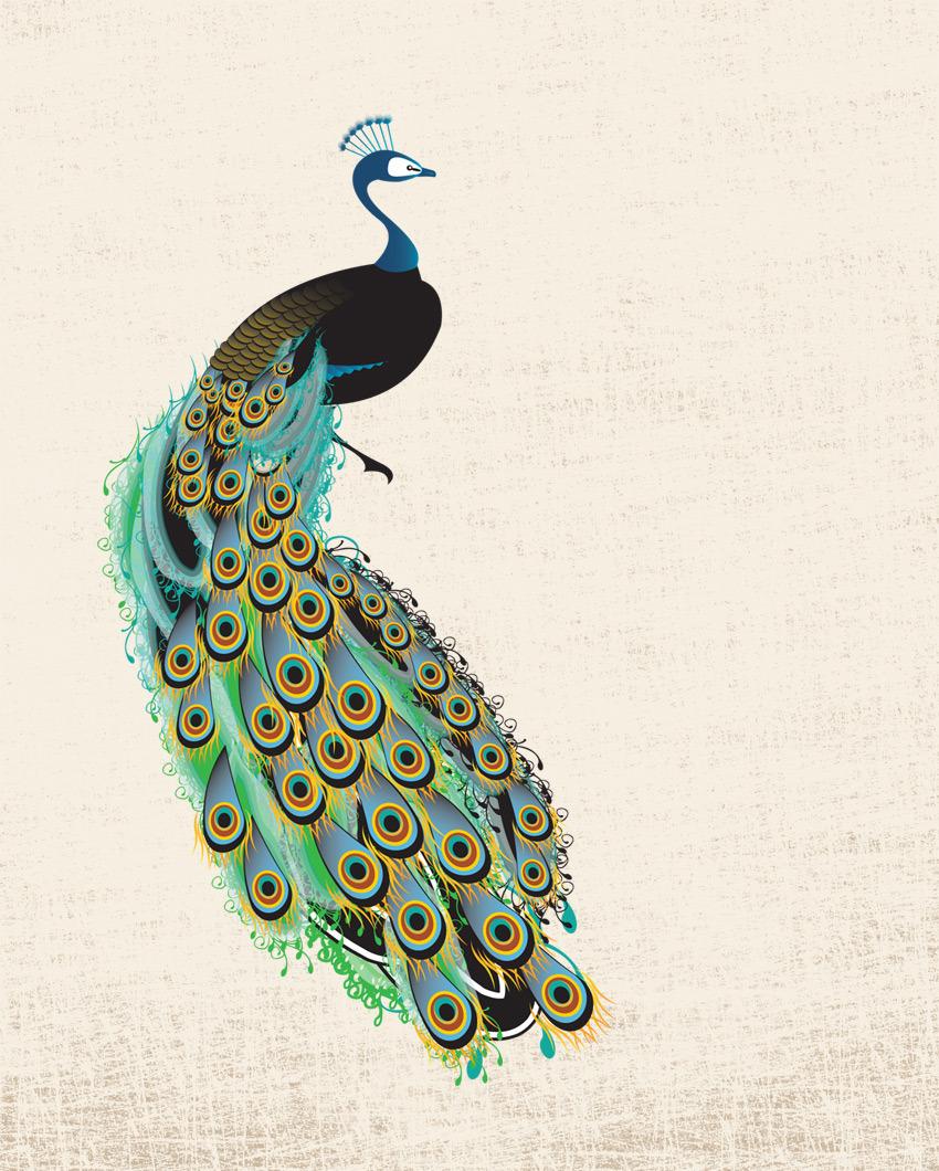 ill_peacock.jpg