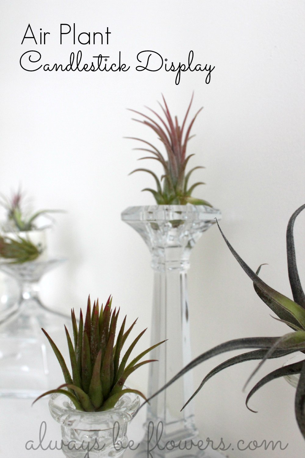 Air plants have fascinating texture.