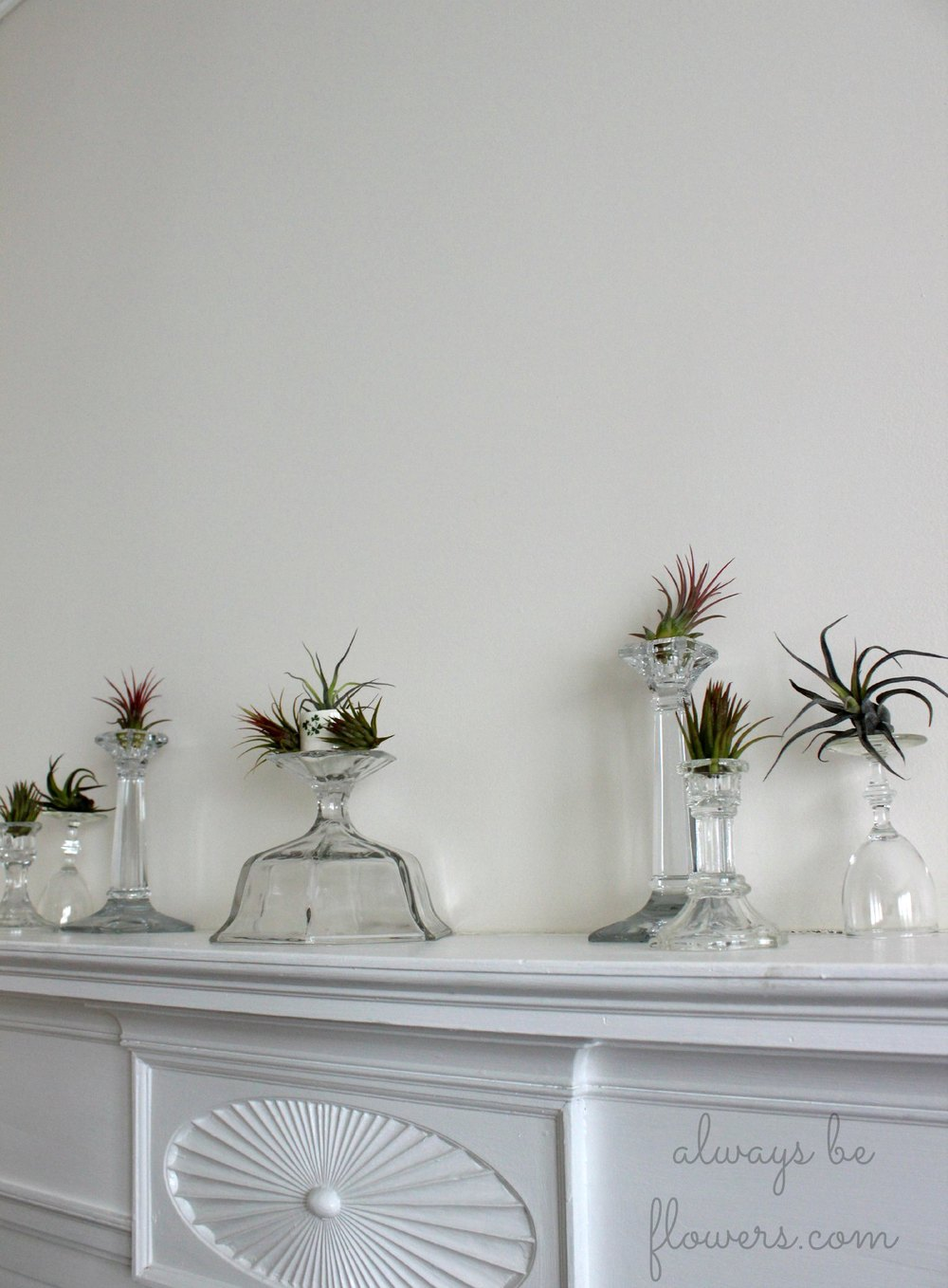 Glass candlestick holders add vertical interest to the air plants.