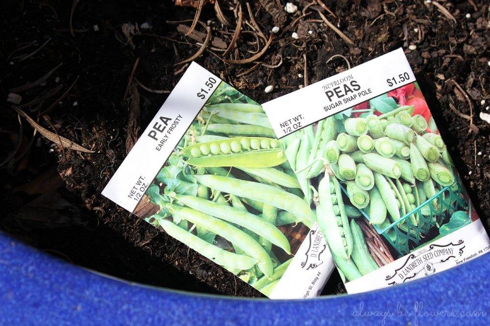 Sugar snap peas are my favorite!