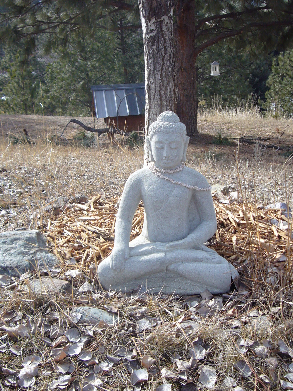 buddha in the sun