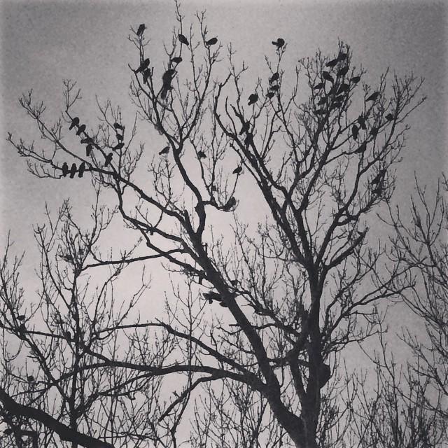 #birdynumnum