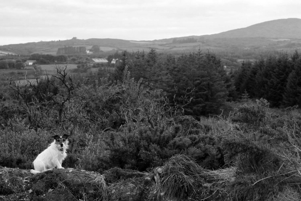 Pola the terrible terrier. The Queen of Glensallagh.