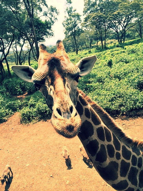 On my latest trip to Kenya, I was lucky enough to have a good chat with this guy.