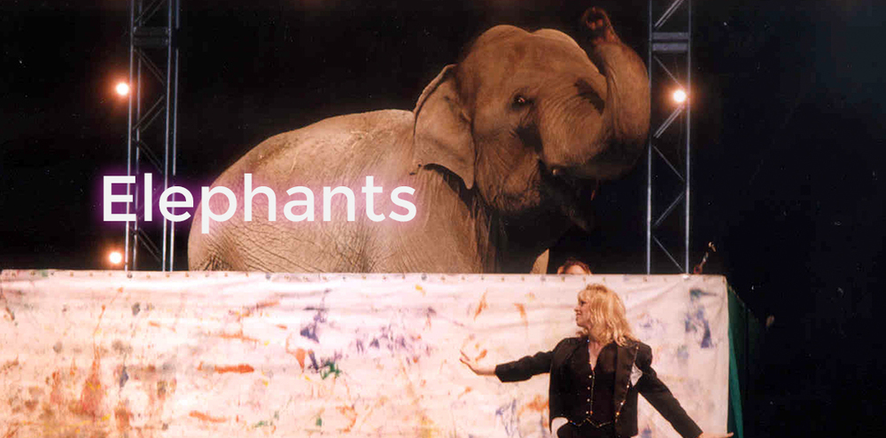 elephants-main.jpg