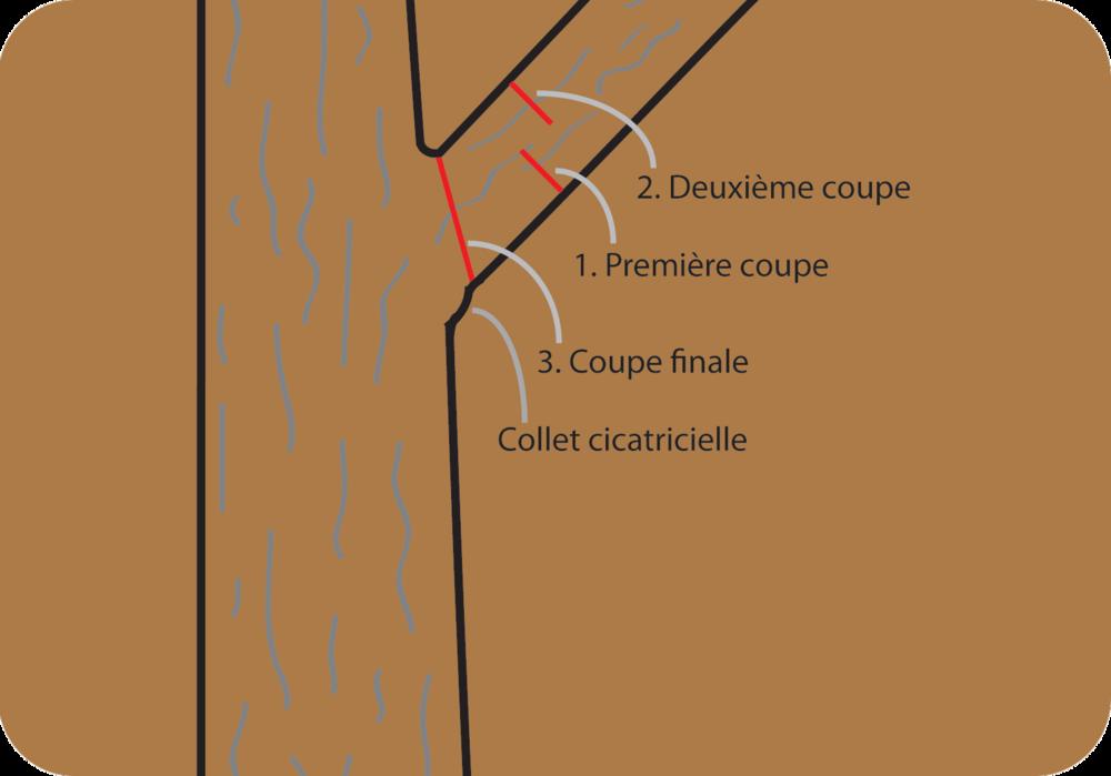 Grosse branches - cliquez pour voir