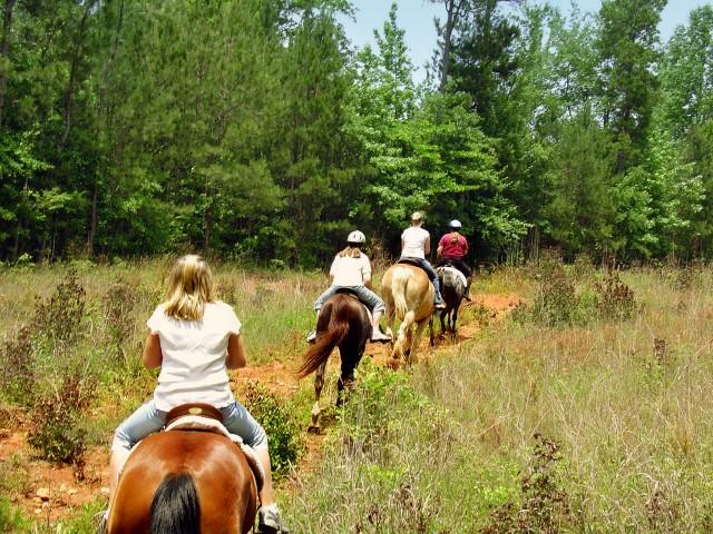 horses (Small).jpg