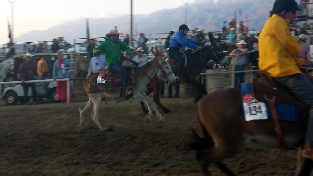 donkey racing 2.jpg