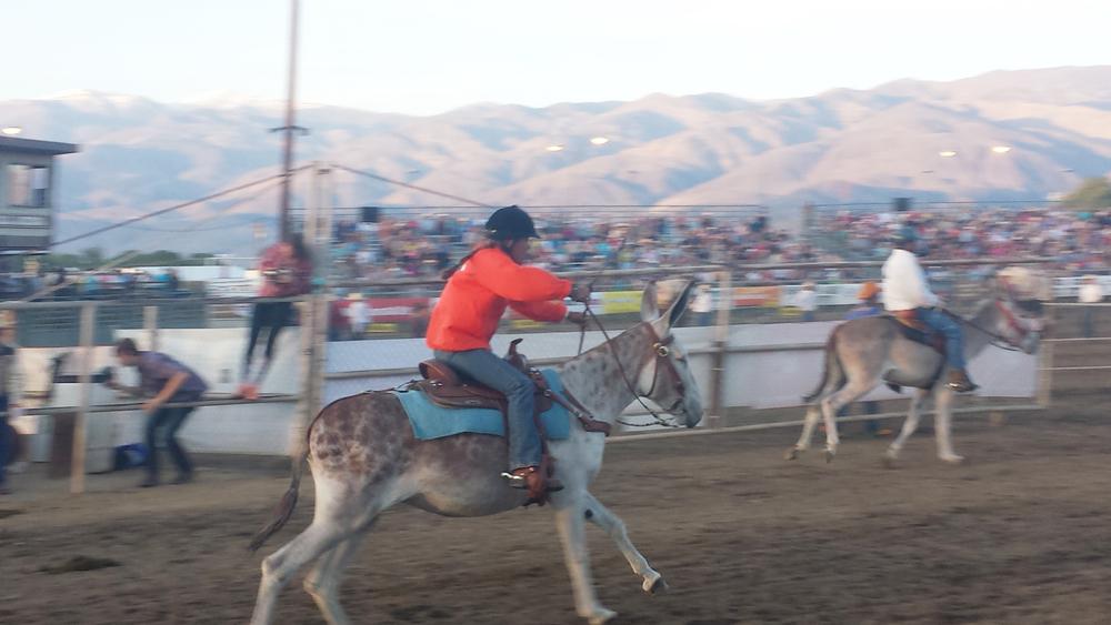 donkey racing.jpg