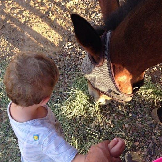 Little Mule Skinner