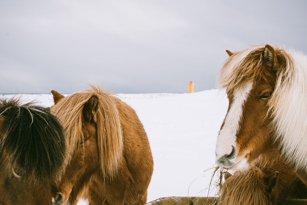 IcelandScotland©brianamoore-20.jpg
