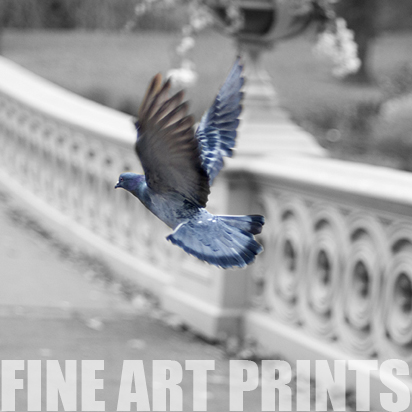 Fine Art Prints: My fine art photography is available in very limited editions. I am still building this page so if you see something in my photography pages that you would like, please contact me.