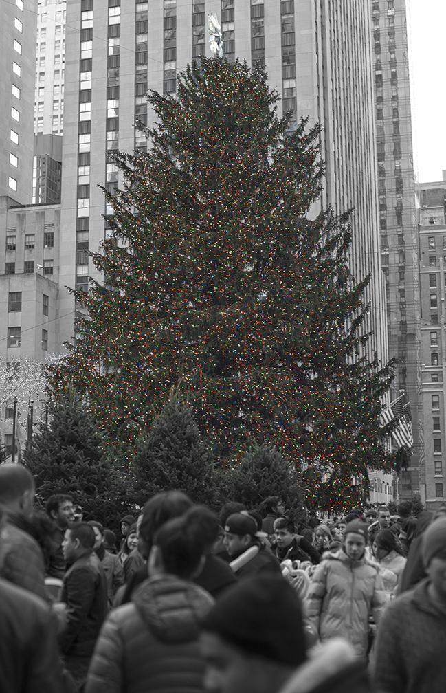 Tree_5415.jpg