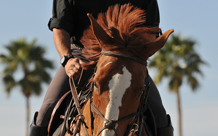 HorseFace_1296©ChesherCat.jpg