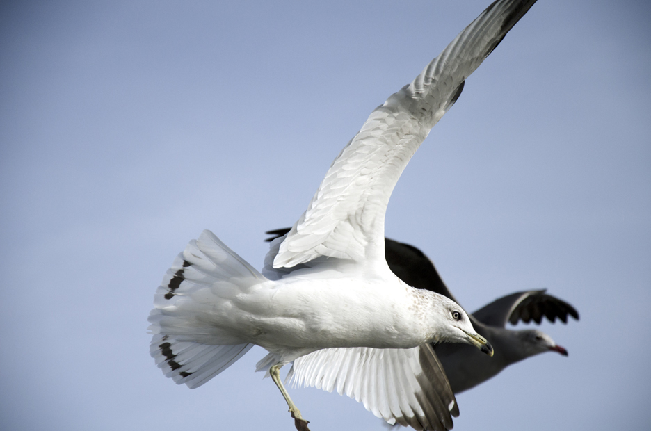 Seagulls_3119.jpg