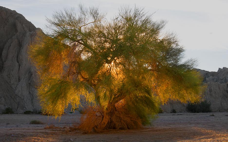Tree_2317©ChesherCat.jpg