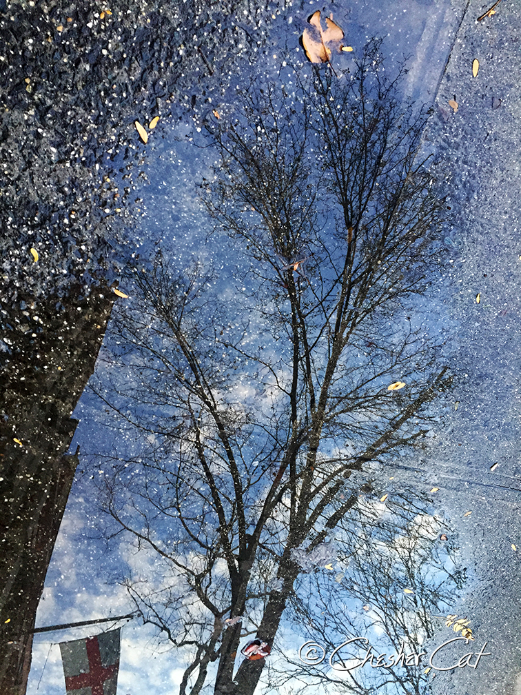 Tree, 2017   Shot on iPhone6 12/24/17 Posted 12/24/17