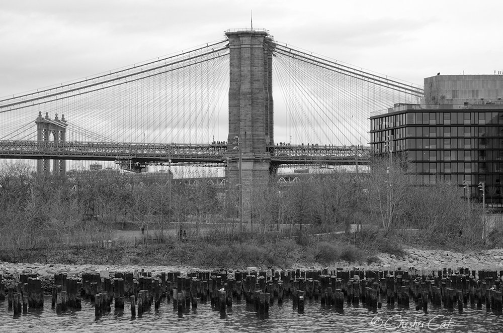 Bridge Spectators, 2018   Shot on Nikon D7000 02/17/18 Posted 02/17/18