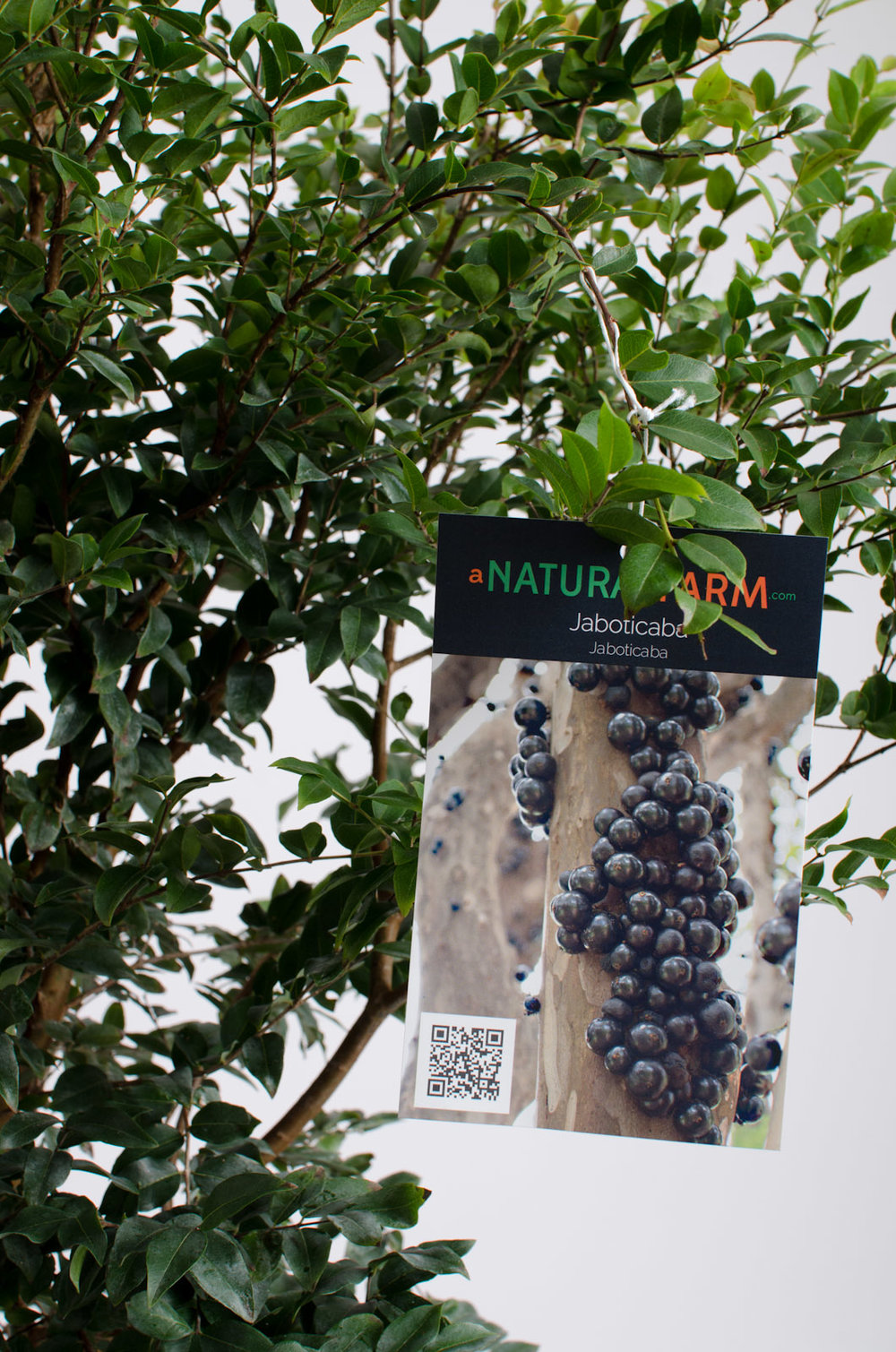 jaboticaba-commerce-6620.jpg