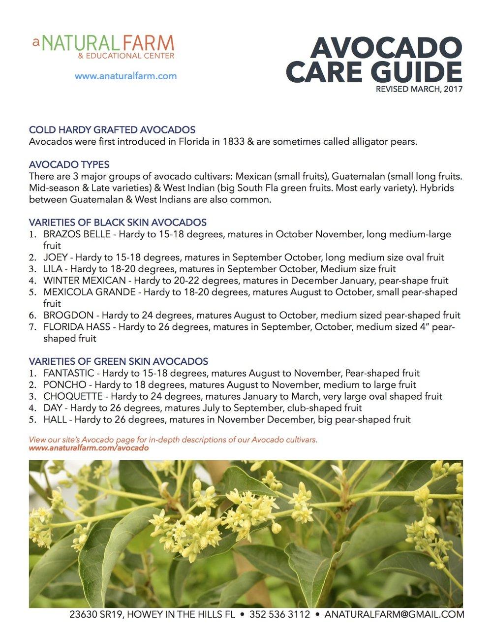 avocado care guide 2017.jpg