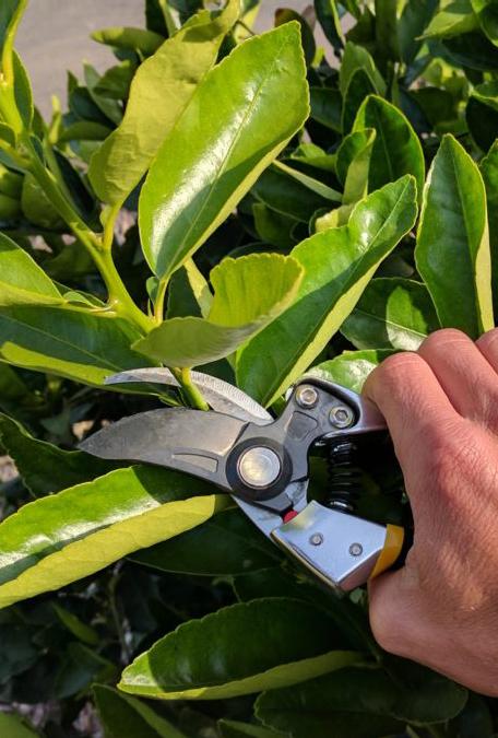 pruning_Cropped.jpg