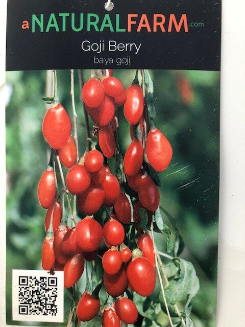 Organic Goji Berry Plant In 4 Pot Free Shipping Dormant Without