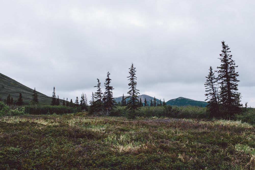 Dillingham Alaska, rural Alaska, bush Alaska wilderness, Anchorage Alaska wedding photographer, Alaskan adventures, elope in Alaska, hiking in Alaska, hiking under the midnight sun, Alaskan portrait photographer, photo by Jess Hunter