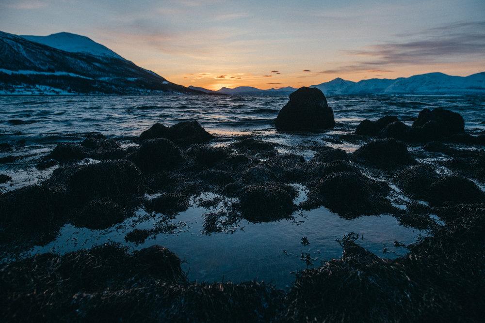 vogelsfotos geschichten portfolio destination norwegen tromsö-007.jpg