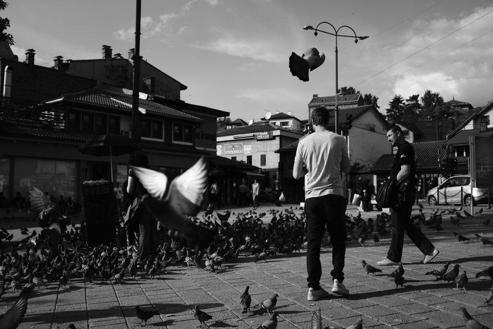 vogelsfotos portfolio geschichten spitanien-011.jpg