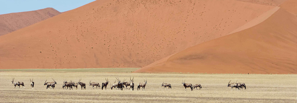 Wildlife near the famous Sossusvlei dunes
