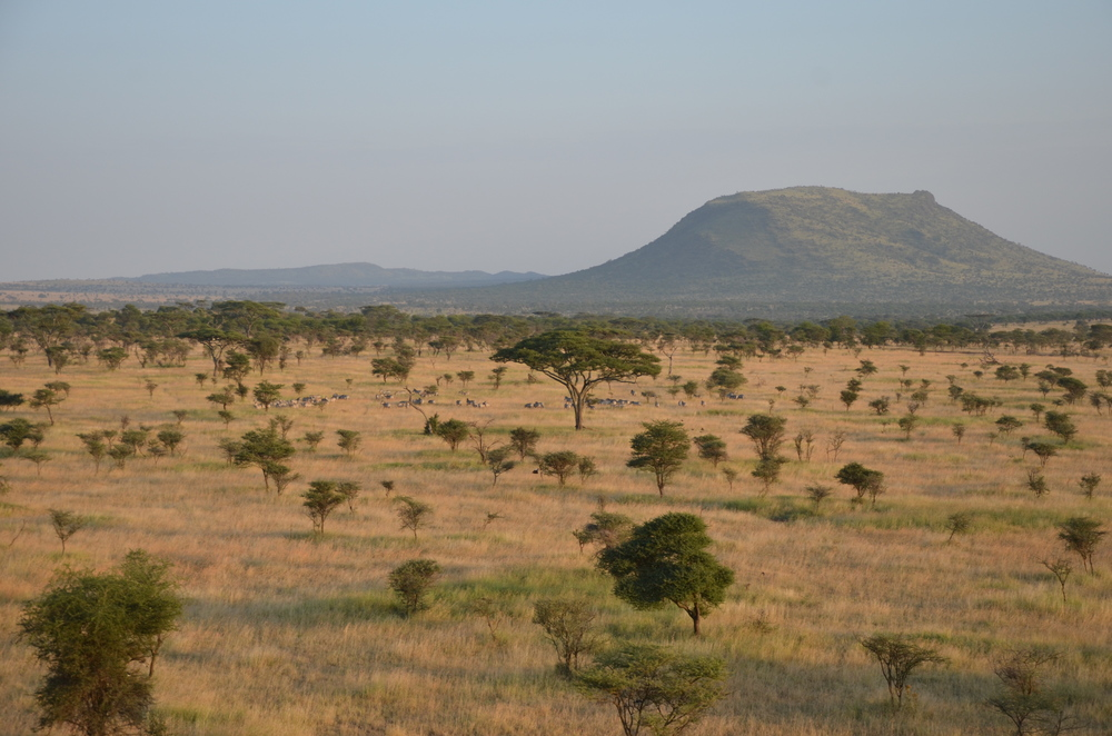SerengetiLandscape.JPG