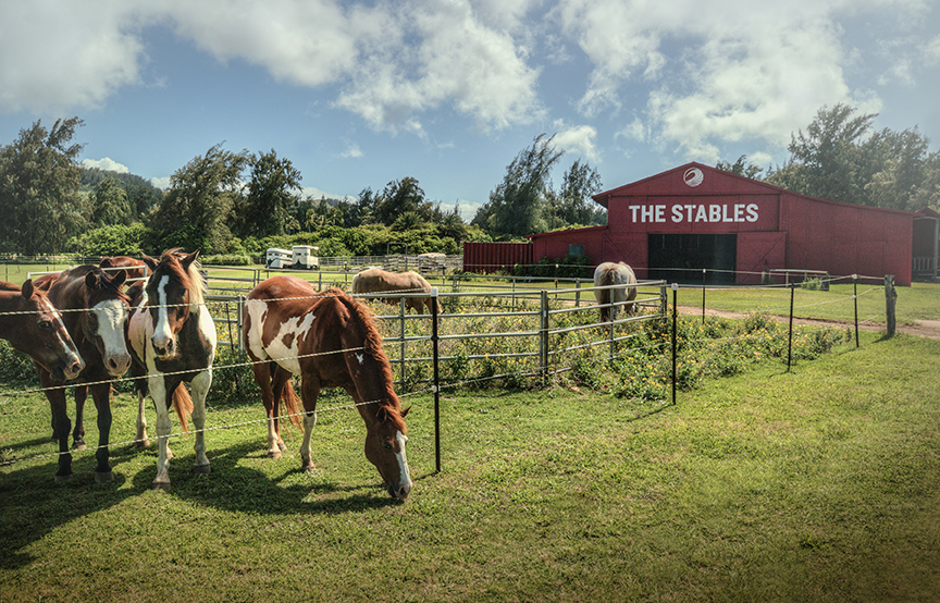 USA-Hawaii-Oahu-Turtle Bay Resort-Stables.jpeg