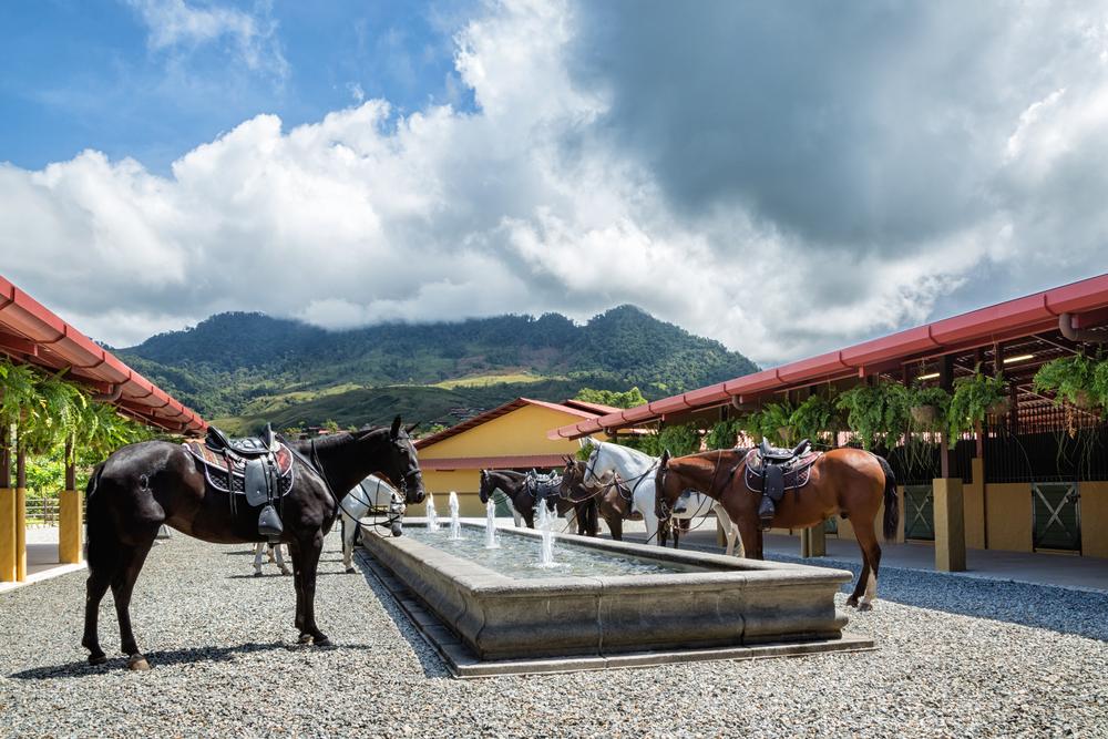 ALTA-Equestrian-Experience-Breed-Horses-in-fountain.jpg