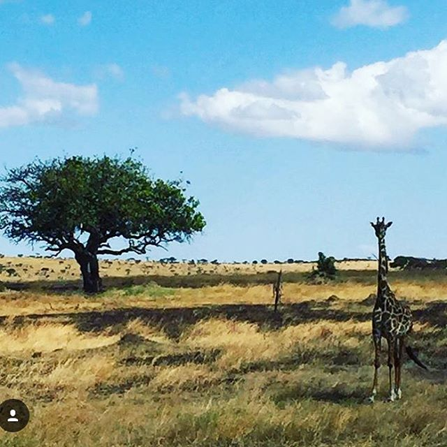 Writer and model @cathyfedoruk may be exploring the #Serengeti today (she just shared this amazing shot from her #safari), but on the Passported blog, she's handing out tips about where to stay in #Vancouver. Follow the link to see which stylish hotel is a great sleep when heading to Cathy's home AWS from home, Whistler. #getpassported