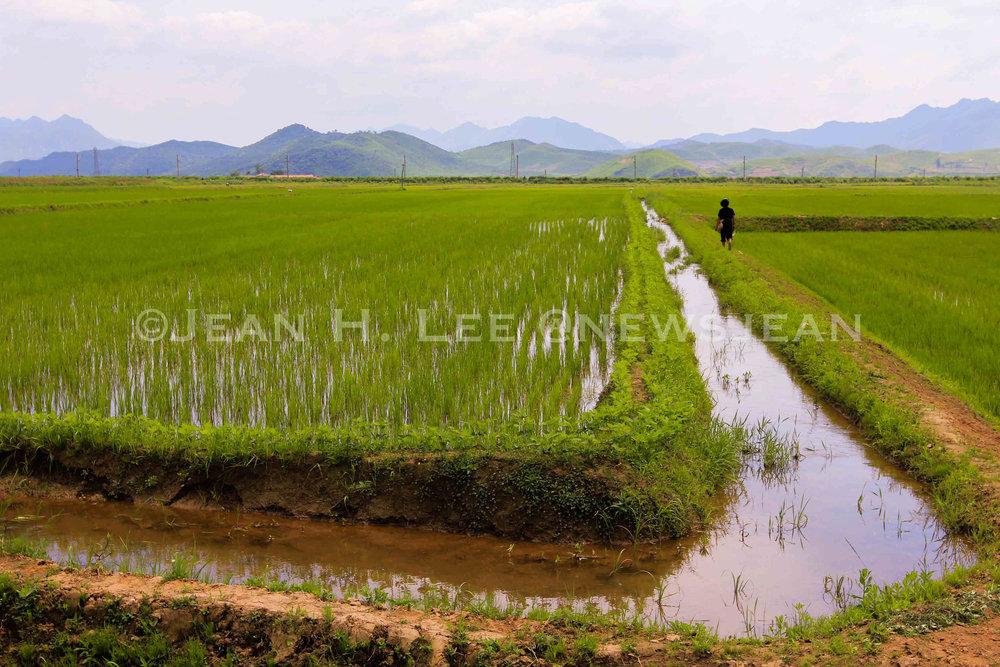 NKorea-Farm-1-.jpg