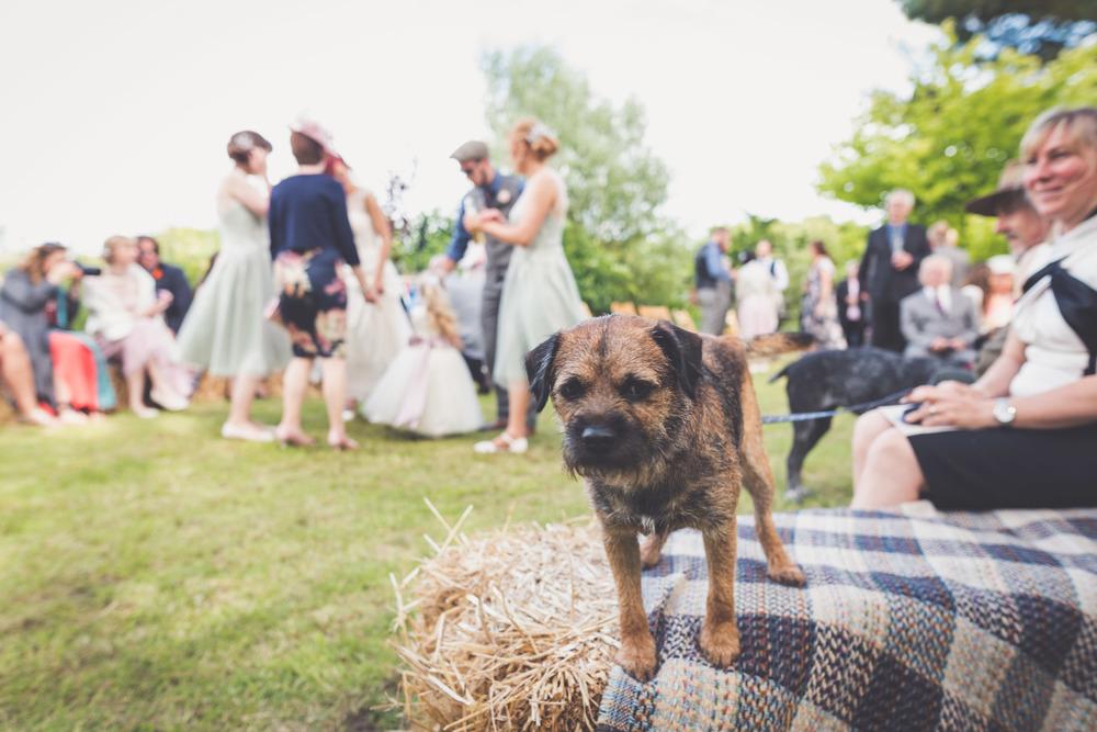 Ash Rescue Centre Wedding Photography 50