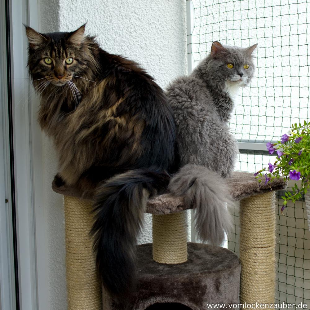 Maxi und Sammy auf dem Balkon
