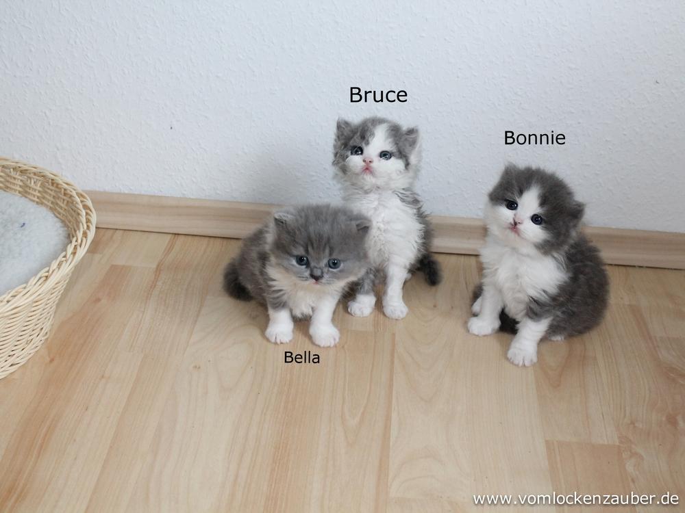 Bella, Bruce, Bonnie