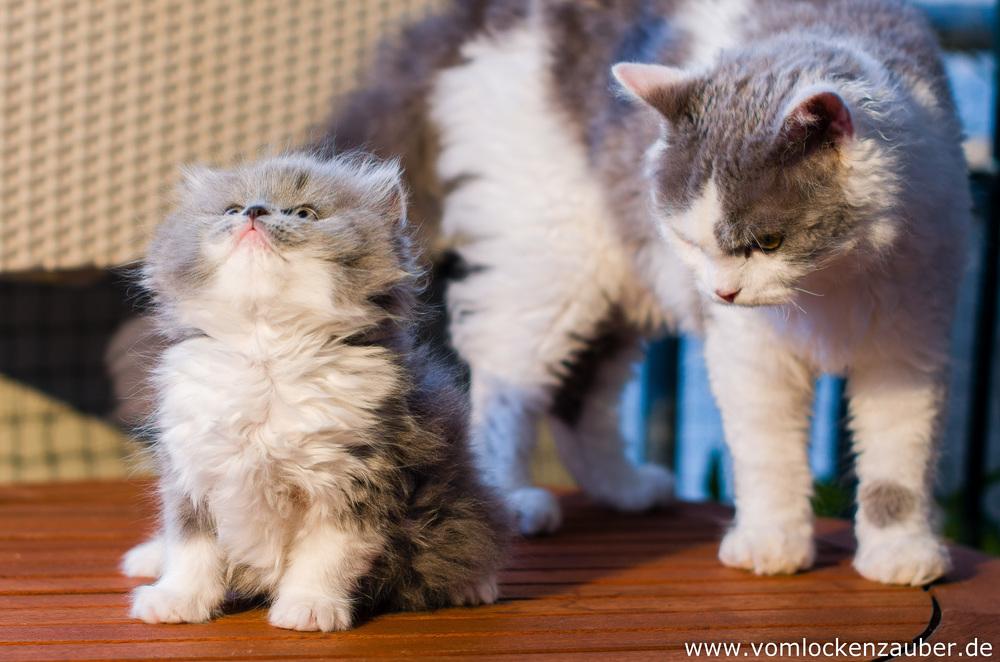 Bella und Roxana