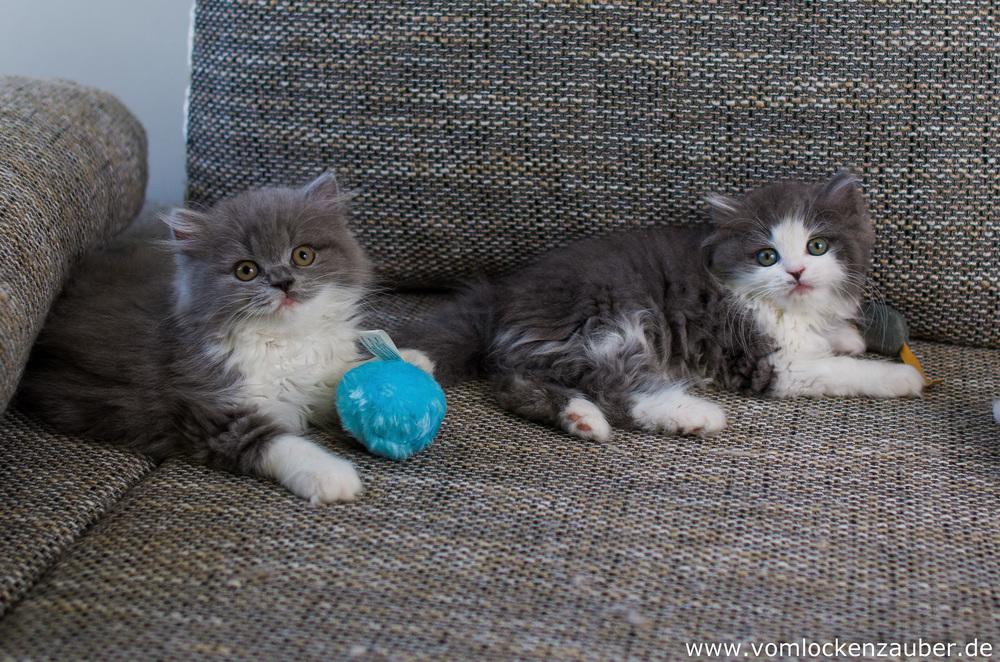 Bella und Bonnie