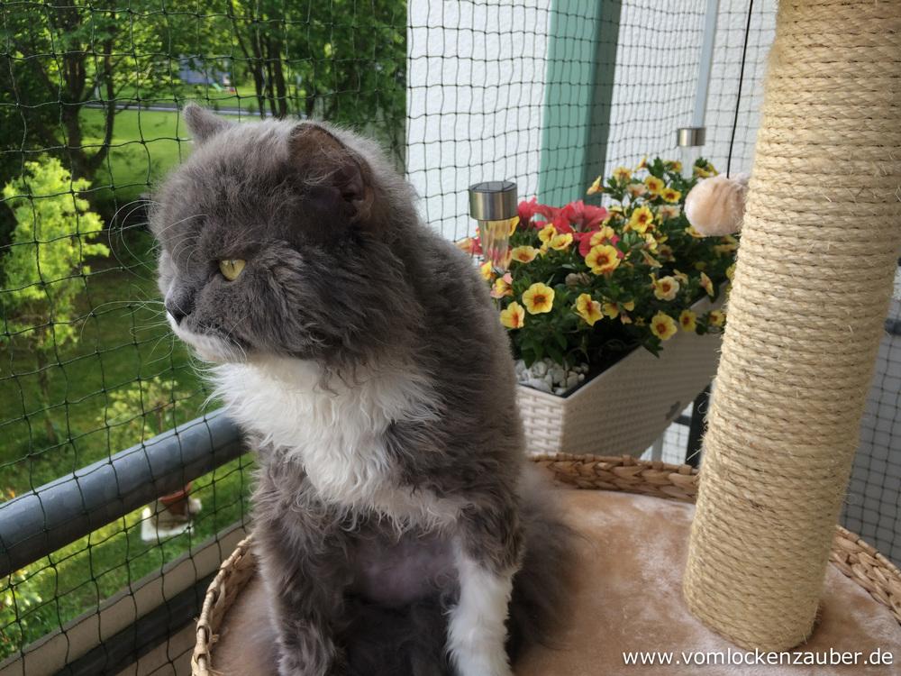 Maxi beobachtet die Vögel